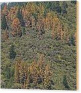Reds---greens---blues Wood Print