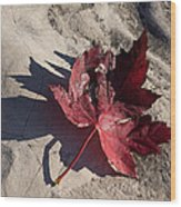 Reds And Purples - Deep Red Maple Leaf And Its Shadow Wood Print