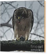 Redtail Hawk And Mouse Wood Print
