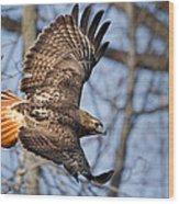 Redtail Hawk Wood Print by Bill Wakeley