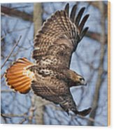 Redtail Hawk Square Wood Print by Bill Wakeley