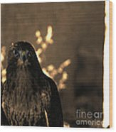 Redtail Wood Print by Steven Digman