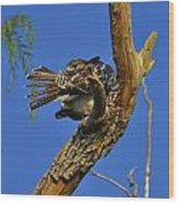 Redtailed Hawk Yearling Wood Print