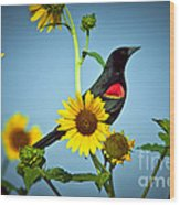 Redwing In Sunflowers Wood Print