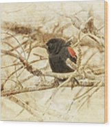 Redwing In The Wind Wood Print
