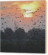 Redwing Sunset Wood Print