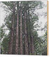 Redwood Fairy Ring Close Wood Print