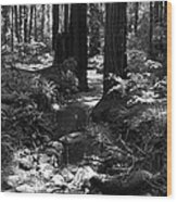 Redwood Creek Wood Print