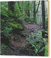 Redwood Forest Scene 1 Wood Print
