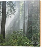 Redwood Forest With Sunbeams Wood Print