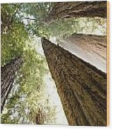 Redwood Heaven Wood Print