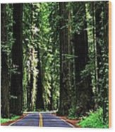 Redwood Highway Wood Print