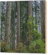 Redwood Lineup Wood Print