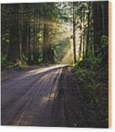 Redwood Magic Wood Print