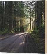 Redwood National Park Morning Wood Print