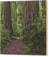 Redwood Path Wood Print