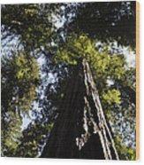 Redwood Reach II Wood Print