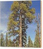Redwood Wood Print