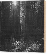 Redwood Sunburst Monochrome Wood Print