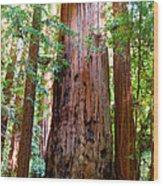 Redwood Tree  Wood Print