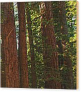 Redwood Wall Mural Panel Three Wood Print