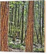 Redwoods 2 Big Basin Wood Print