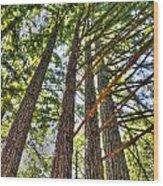 Redwoods 3 Big Basin Wood Print