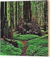 Redwoods Wonderland Wood Print by Benjamin Yeager