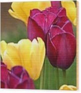 Redyellowtulips6728 Wood Print
