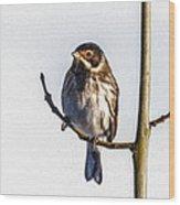 Reed Bunting Emberiza Schoeniclus Wood Print