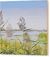 Reed Flowers Wood Print