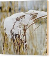 Reed With Snow Wood Print