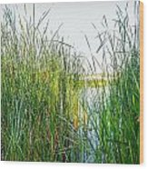 Reeds And River Wood Print
