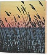 Reeds At Sunset Island Beach State Park Nj Wood Print