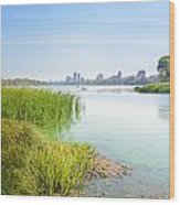Reeds Close To The Shore Wood Print