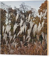Reeds Highlighted By The Sun Wood Print
