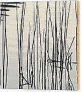 Reeds II Wood Print
