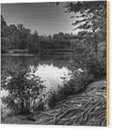 Reedy Creek Park Wood Print