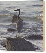 Reef Egret Wood Print