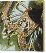 Reef Lobster Close Up Spotlight Wood Print