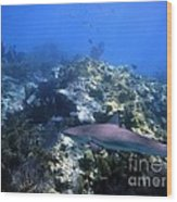Reef Shark Wood Print