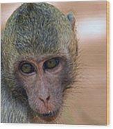 Reese's Monkey Portrait Wood Print