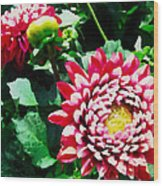 Ref Dahlias Wood Print