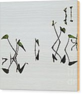 Reflect Wood Print by Vishakha Bhagat