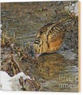 Reflected Eye Woodcock Wood Print