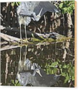 Reflected Great Blue Heron Wood Print