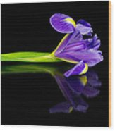 Reflected Iris Wood Print