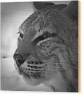 Reflecting Bobcat... Wood Print by Christena Stephens