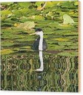 Reflecting Grebe  Wood Print