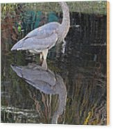 Reflecting Great Blue Heron Wood Print